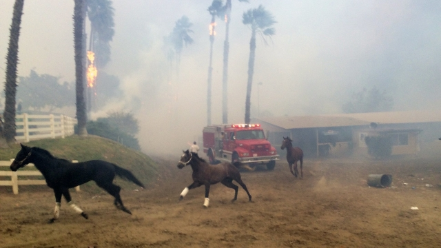 Trainers rushed to save terrified horses as flames closed in